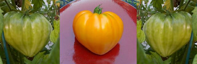 Love Tomatoes!